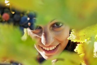 closeup of young woman picks grapes in vineyard